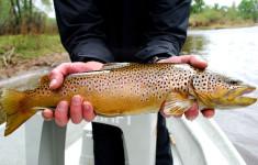 fishing_license_3