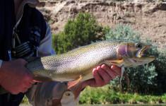 trophy_trout_1